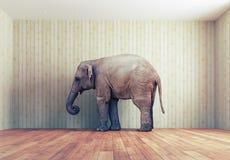 En elefant i rummet Royaltyfri Bild