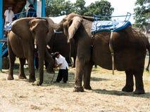En elefant tycker synd om en annan elefant på en mässa Royaltyfria Bilder