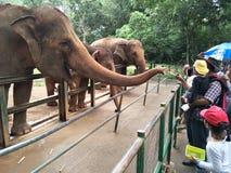 En elefant väntar tålmodigt på mat från zoobesökare för att ge någon mat arkivbild