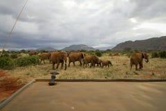 En elefantfamilj Arkivbilder