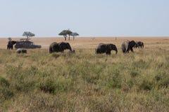 En elefantfamilj som går över savannahen arkivbild