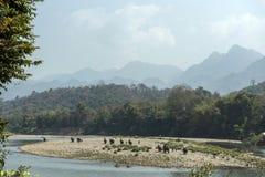 En elefantritt över floden Arkivbild