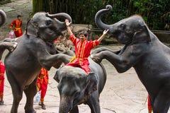 En elefantshow Royaltyfri Bild