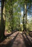 En engelska Forest Europe Arkivfoton