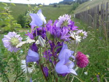 En enkel bukett av blommor samlade på berget Royaltyfri Bild