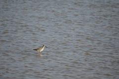 En enkel fågel i vatten royaltyfri bild