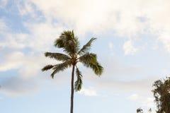 En enkel palmträd når upp till den blåa himlen med moln Royaltyfria Foton