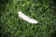En enkel vitduvafjäder i gräset Arkivbild