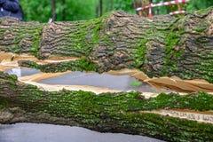En enorm spricka i ett träd som är stupat över vägen som ett resultat av Arkivfoto