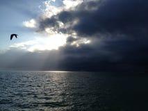 En ensam fågel som fångas i Mitt--flyget, orkan som att närma sig, Key West, FL Fotografering för Bildbyråer
