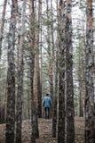 En ensam grabb i en pinjeskog i hösttiden Arkivbilder