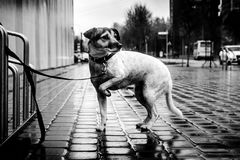 En ensam hund på gatan dramatisk lighting Ett svartvitt foto royaltyfria foton