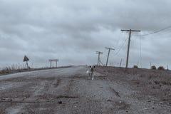 En ensam hund på vägen Royaltyfria Bilder