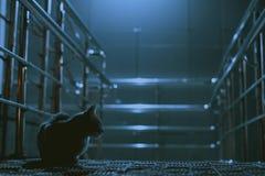 En ensam katt i en nattstad royaltyfri foto