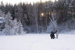 En ensam man går i snön Dramatisk kontur av en man som kallt går i en snöig röjning i skogen royaltyfri fotografi