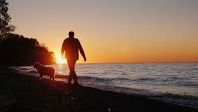 En ensam man går med en hund nära sjön eller havet på solnedgången tillbaka sikt stock video