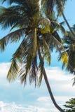 En ensam palmträd vid havet mot himlen royaltyfri fotografi
