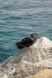 """En ensam seagull i """"Lovran"""", Adriatiskt hav, Kroatien, Istria region Arkivbilder"""