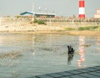En ensam svart hund arkivbild