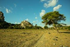 En ensam trädställning i gräsfältet på den Batu Termanu stranden royaltyfria bilder