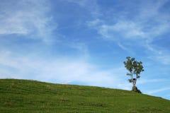 En ensam tree royaltyfria bilder