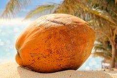 En enslig orange kokosnöt som lägger på den vita stranden Royaltyfri Bild