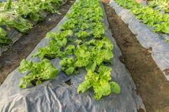 En enveloppant le sol pour garder l'humidité et pour éviter l'herbe sarclez photo stock
