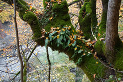 En epiphyte planterar mossa och ormbunken som växer på trädstammen Royaltyfri Fotografi