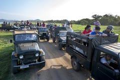 En eskortfartyg av safarijeepar som bär turister, parkerade närgränsande till behållaren på den Minneriya nationalparken i Sri La royaltyfria bilder