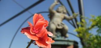 En europeisk ängel Royaltyfria Bilder