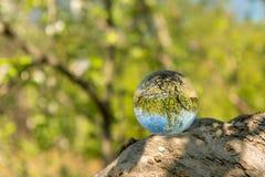 En exponeringsglasboll som ligger på en filial av ett träd arkivfoto