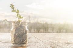 En exponeringsglaskrus mycket av guld- mynt och en växande växt arkivfoto