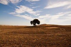 En Extremadura de Dehesa Imagen de archivo libre de regalías