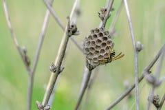 En fältgeting och en bikupa Fotografering för Bildbyråer