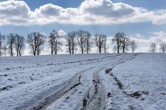 En fälttur mellan snöig fält, träd för hög höjd under en frostig himmel i Skotska högländerna Royaltyfri Bild