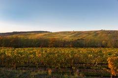 En färgglad vingård i höst i Frankrike royaltyfri foto