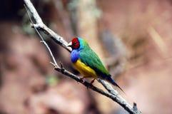 En färgrik papegoja som sätta sig på en filial royaltyfri fotografi