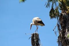 En fågel Royaltyfri Fotografi
