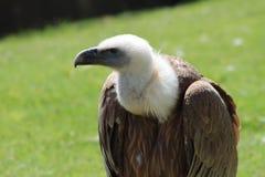En fågel Royaltyfri Bild