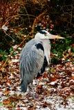 En fågel Fotografering för Bildbyråer
