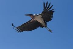 En fågel av rovet Arkivfoton