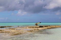 En fågel av rovet, Long Island, Bahamas royaltyfria foton