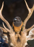 En fågel & en raring Arkivfoton