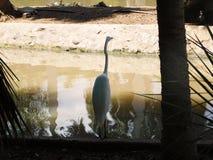 En fågel framme av en sjö Arkivbild