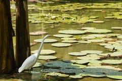 En fågel i ett damm Arkivbild
