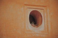 En fågel i ett hål fotografering för bildbyråer