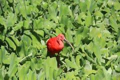 En fågel i gräsplan Arkivbilder