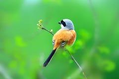 En fågel i grönt landskap av våren Arkivfoto