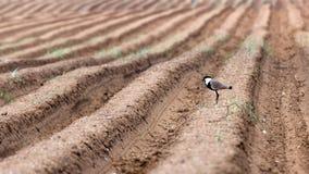 En fågel i höstfält arkivfoton