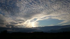 En fågel i himlen Arkivbild